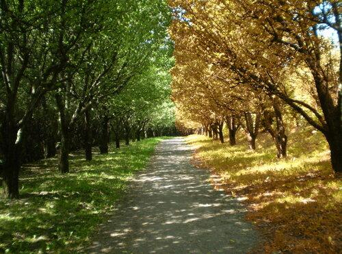 из лета в осень...