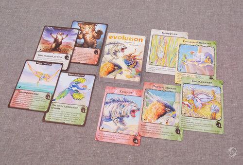 Настольная игра Эволюция: Естественный Отбор - Полёт