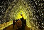 Посетитель ботанического сада в австралийском городе Сидней фотографирует световую инсталляцию «Собор света» во время фестиваля «Огни Сиднея», 25 мая 2016 года. Фото: Jason Reed / Reuters