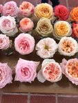 розы-композиции и букеты