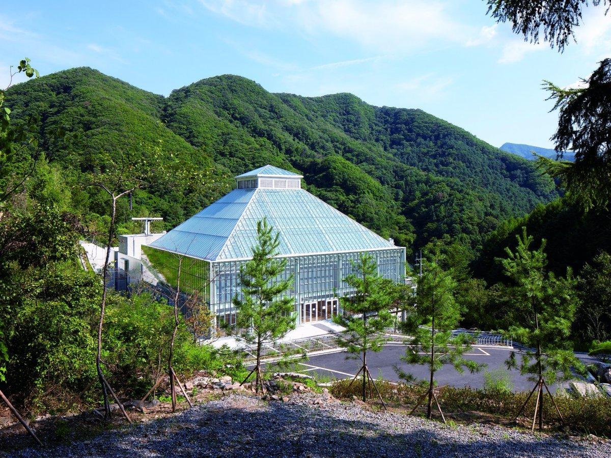 Церковь Света Жизни в Сеуле, Южная Корея, утопает в зелени.
