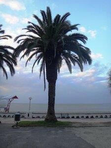 У моря Чёрного, в Абхазии, время зимнее, Новогоднее (2).JPG