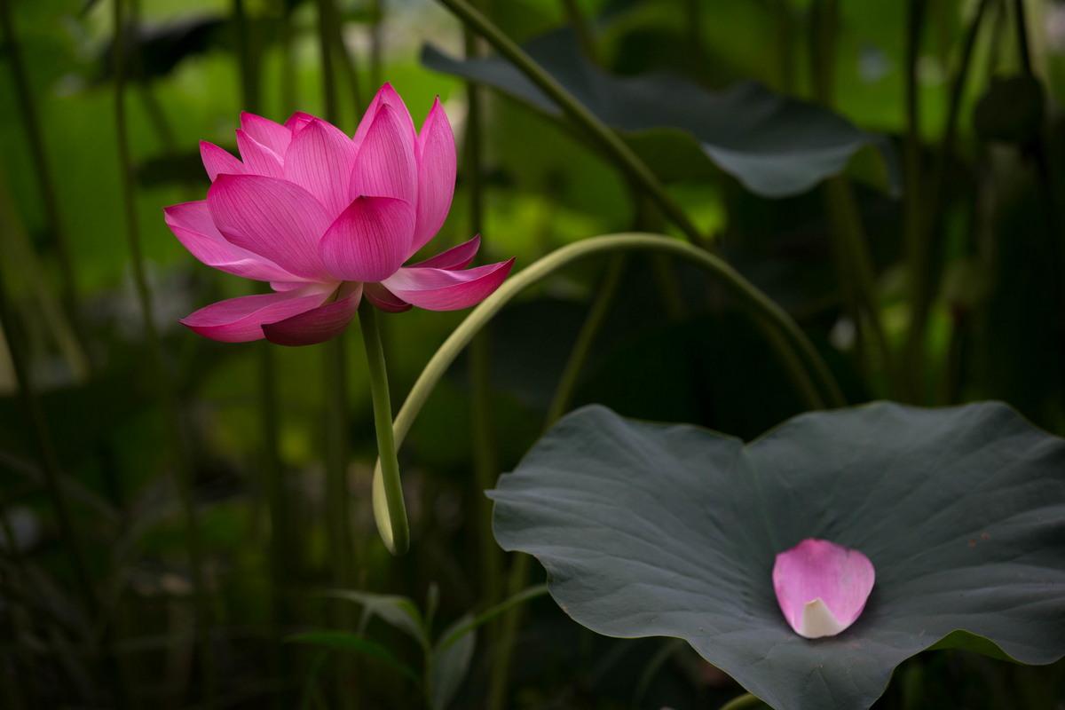 Красота японской природы на снимках Кунито Имаи