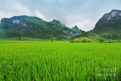 3-rice-field-mothaibaphoto-prints.jpg