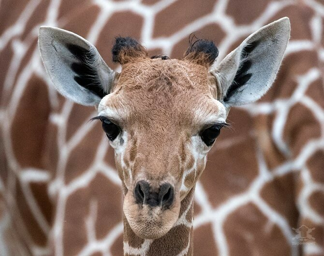 0 178902 ebb3e1b6 XL - Лучшие фотографии животных осени 2017