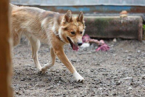 Джек собака из приюта догпорт