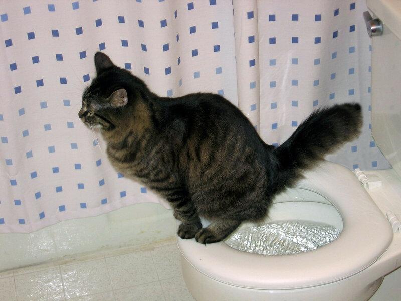 как приучить кошку к унитазу фото