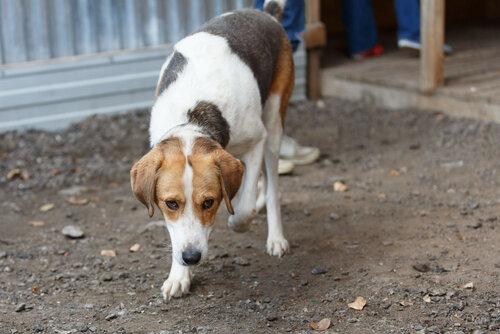 Михей собака из приюта догпорт