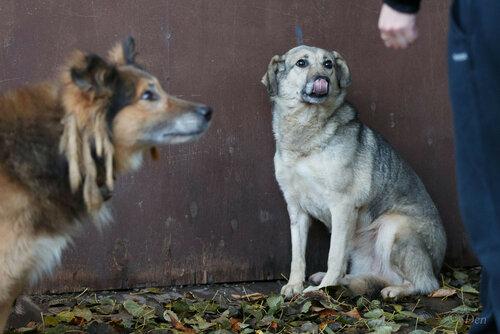 Буся собака из приюта догпорта фото