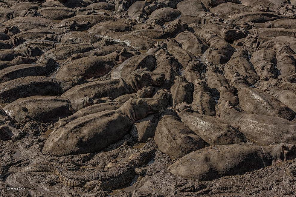5. Победитель в номинации «Поведение: млекопитающие». Десятки кашалотов на северо-восточном побережь