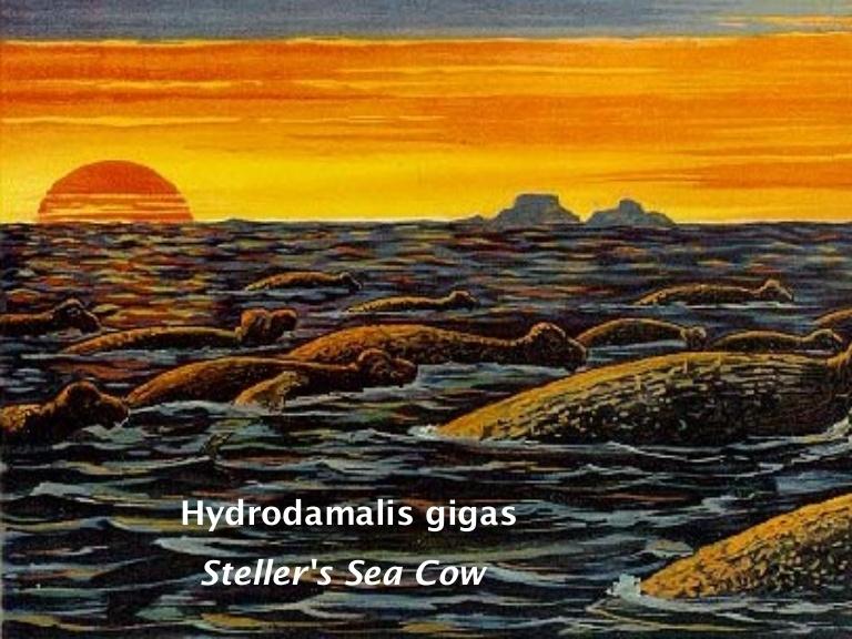 Несчастья морской коровы начались с 1741 года, когда судно «Святой Петр» потерпело крушение у одного