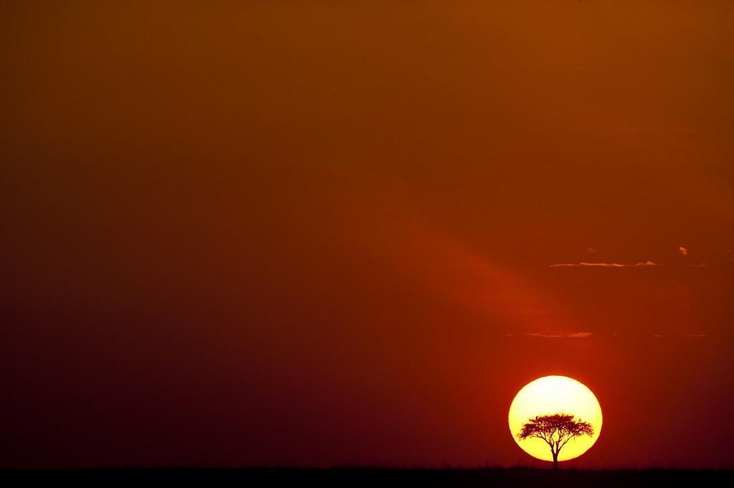 1. Дерево на фоне заката. (Фото: Пол Гольдштейн / Rex)