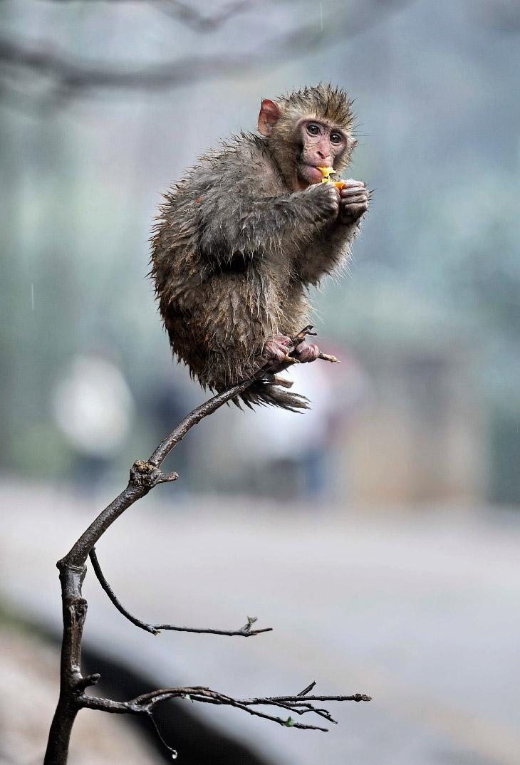 2. Строитель. Эти снимки сделал радиоинженер из России Вадим Трунов. «Я кормил белок орехами в лесу.