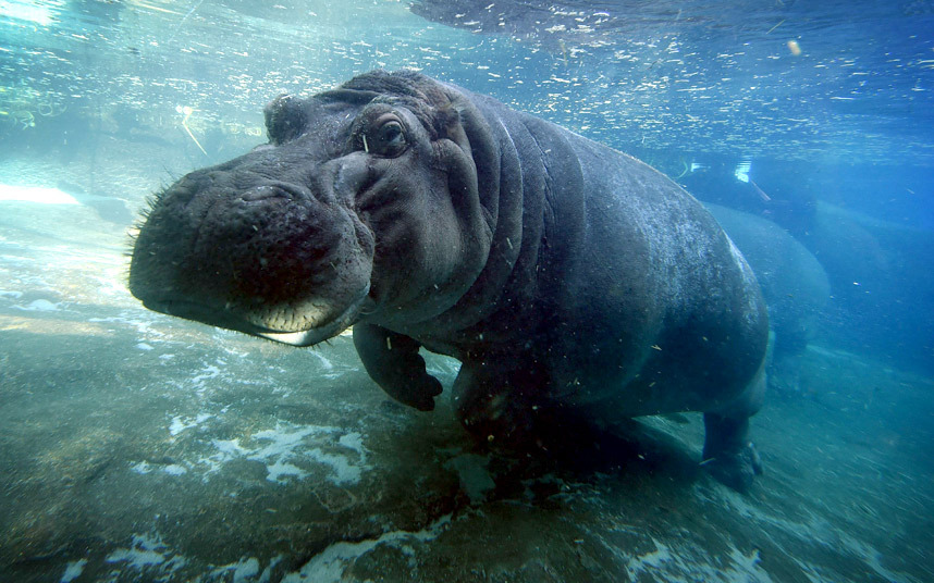 10. Серьезный разговор. Боксер с хозяином повстречали другую собаку на пляже в Калифорнии. (Фото Mik