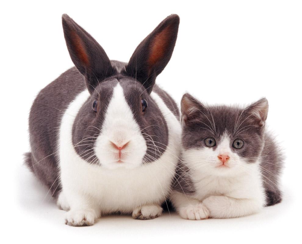 8. Растительноядный и абсолютный хищник. Кролики — животные-жертвы, поэтому они всегда настороже отн