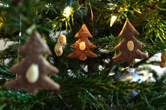 NagyG / Shutterstock.com     4. Желтую Собаку привлекут  лакомства : конфеты, пе