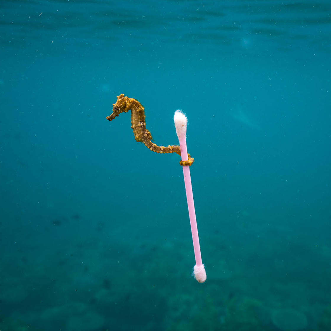 © Justin Hofman / Wildlife Photographer of the Year