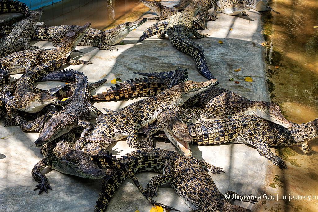 крокодиловая ферма в паттайе, таиланд