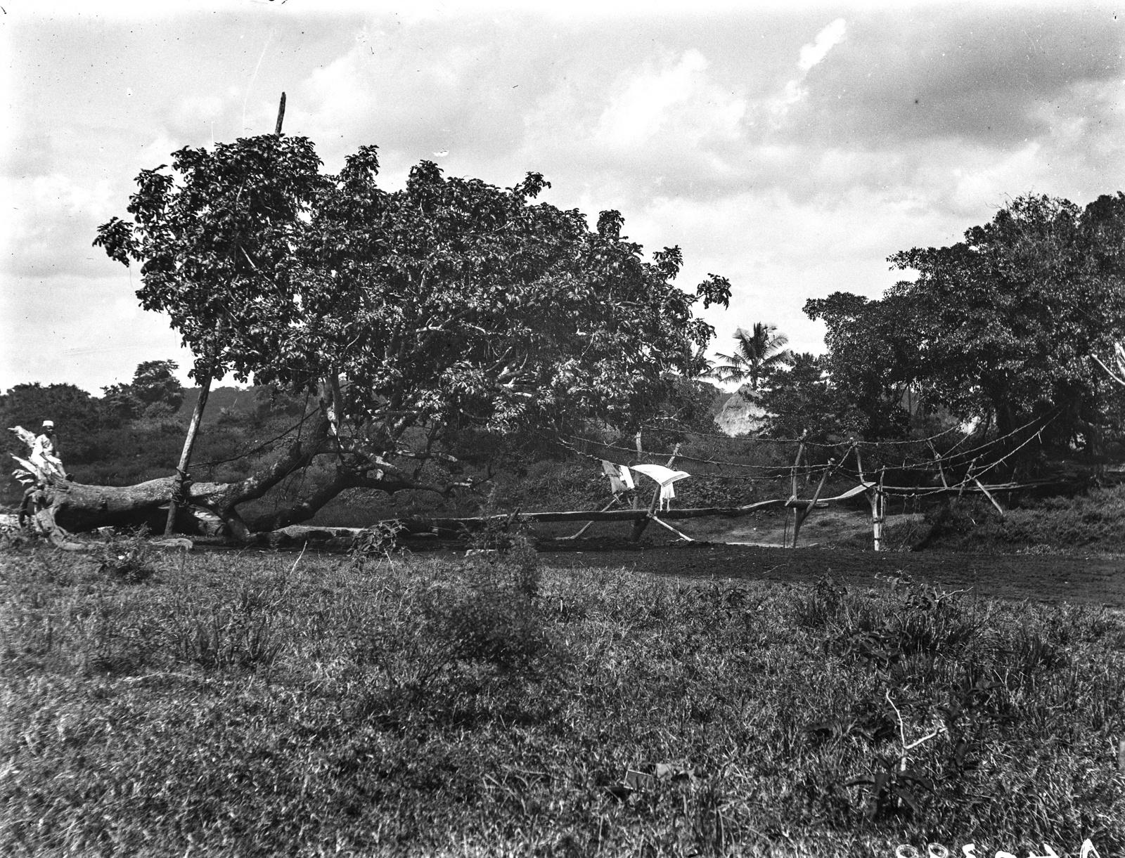 109. Упавшее дерево как мост
