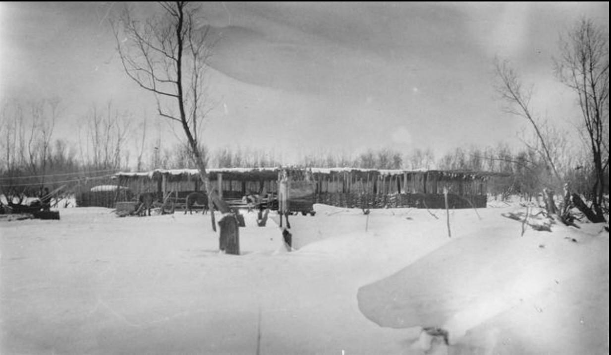 Овчарки в снегу