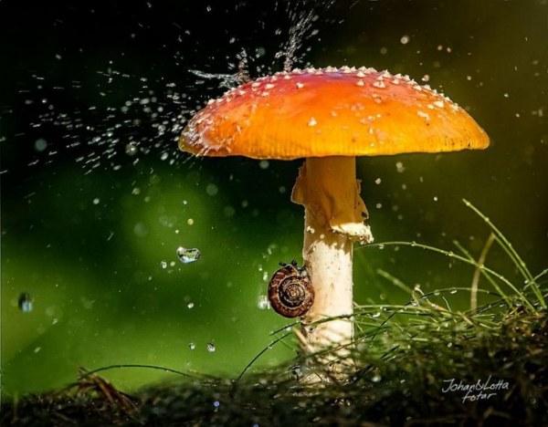 Ftografii-naxodchivyx-zhivotnyx-ukryvshixsya-ot-dozhdya-pod-prirodnymi-zontikami-21-foto