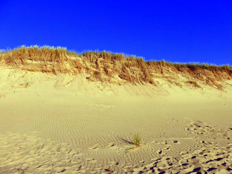 Авандюна вдоль пляжа