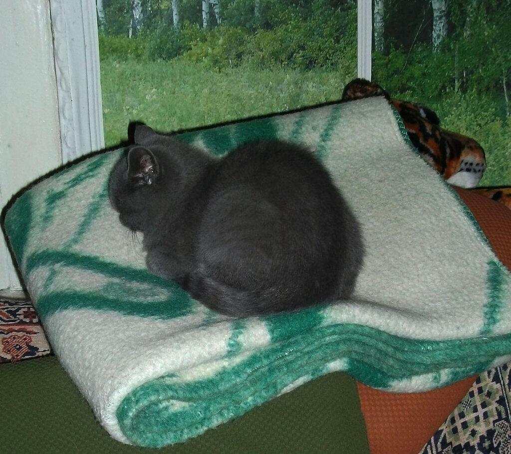На спинке дивана