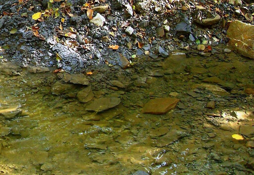 У воды, под Горячим Ключом, в лесу (166).JPG