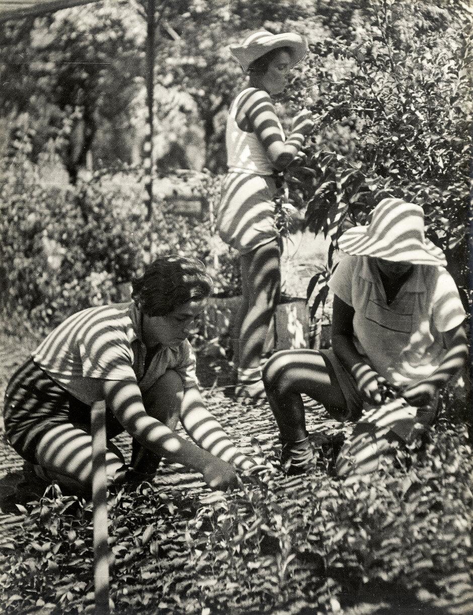 1937. Кибуцники собирают урожай
