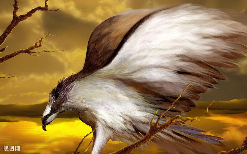 Фото птицы дятел кукушка.  Где гнездиться эта птица.