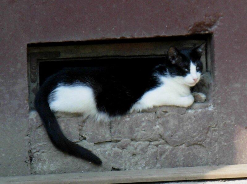 жизнь кошачья