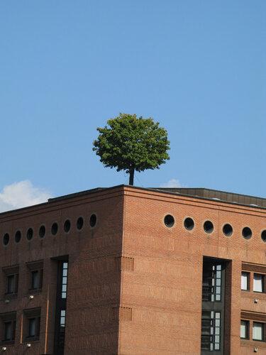 Очень одинокое дерево