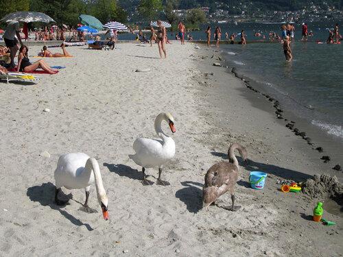 Семейство на пляже