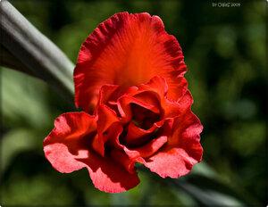 Сердце-цветок