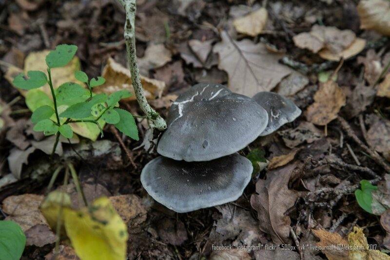 грибное великолепие
