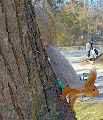 Кажется там орешки раздают!