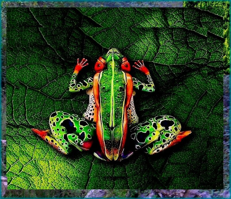 А вот и лягушка. Встреча с представителем параллельных миров на Природе... .jpg