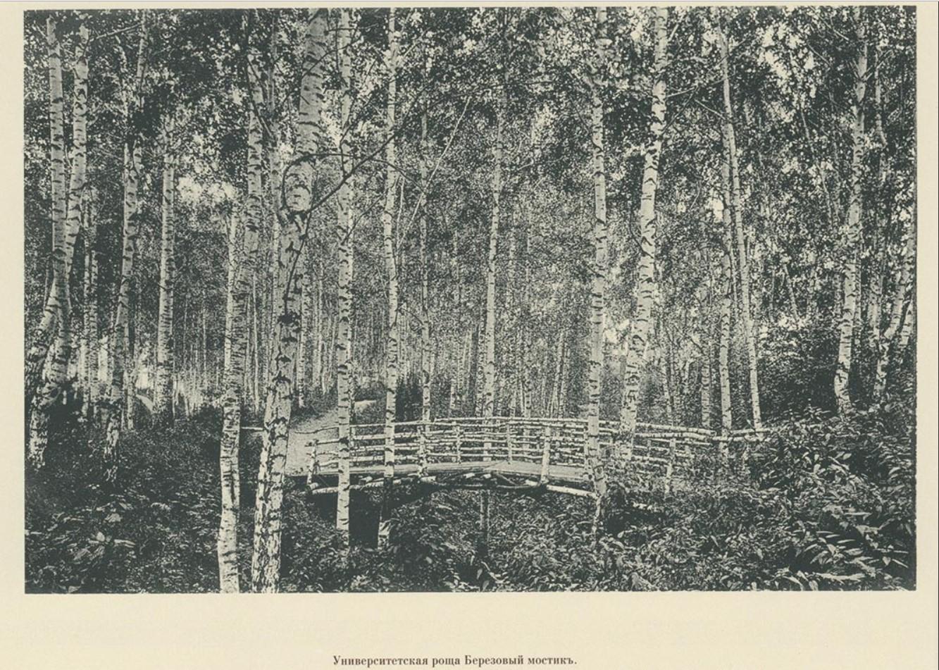97. Университетская роща. Березовый мостик