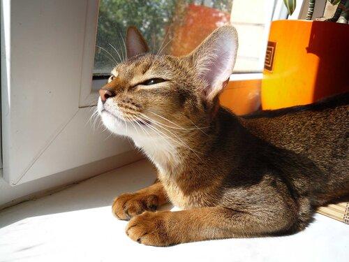 Крови норма у кошки большой ли живот у