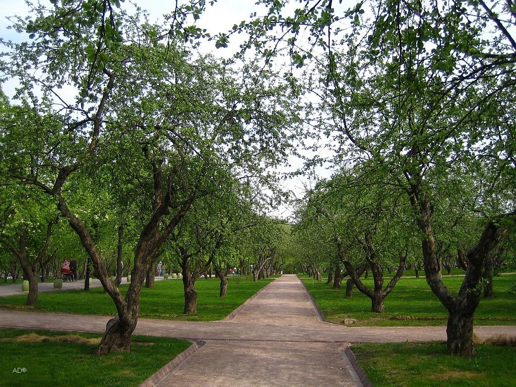 Казанский яблоневый сад