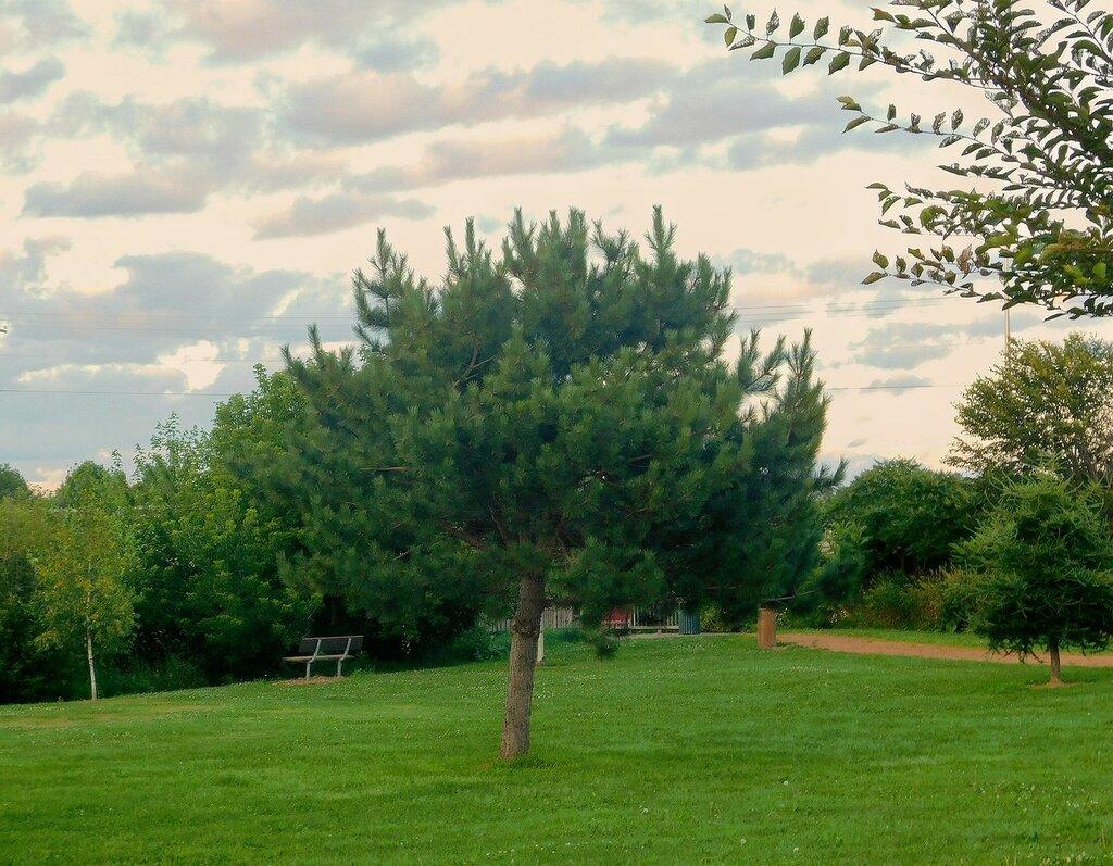 Встреча в парке.