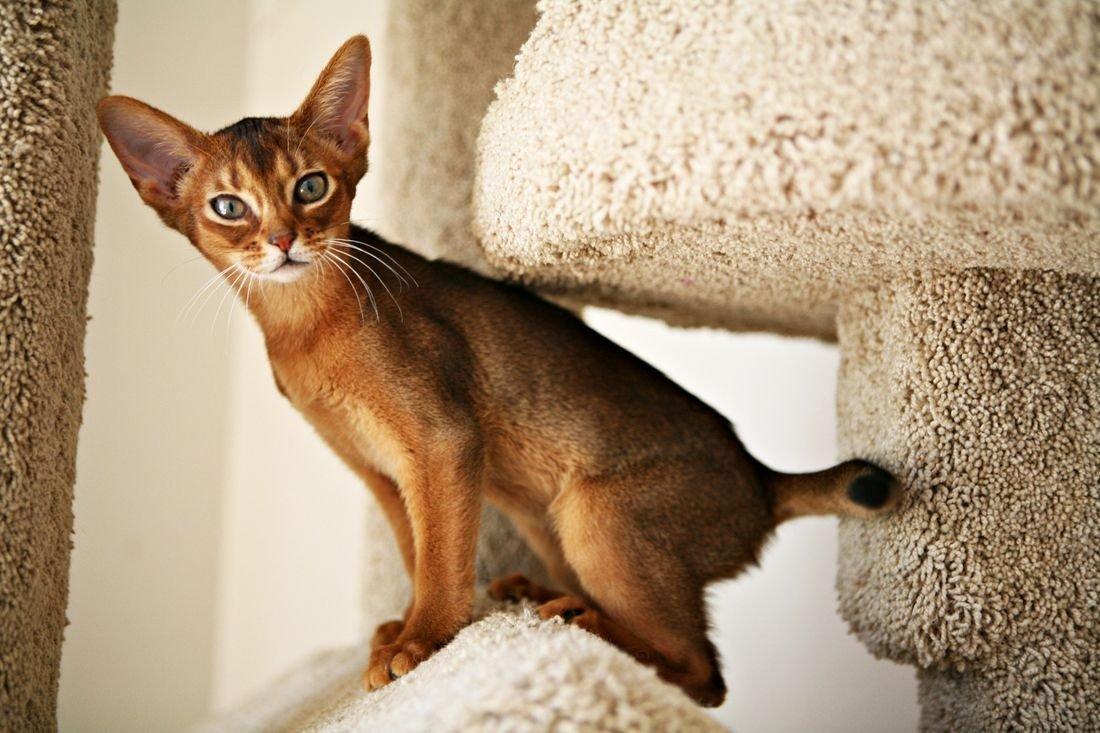Вумен дей фото котят
