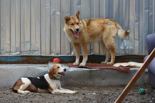 Джек собака из приюта догпорта фото