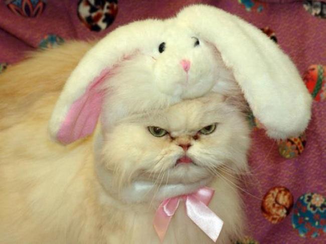 © imgur  Янарисовал другую свою кошку всамурайском шлеме. Эта кошка явно обиделась