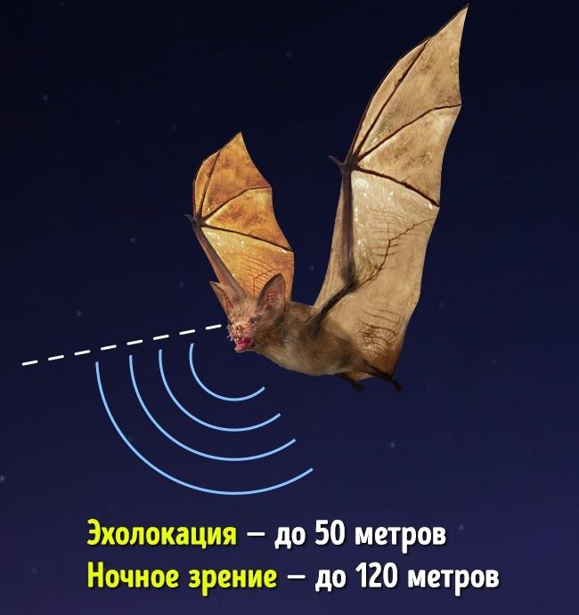© depositphotos  Насамом деле: хотя для ориентации впространстве летучие мыши используют эхо