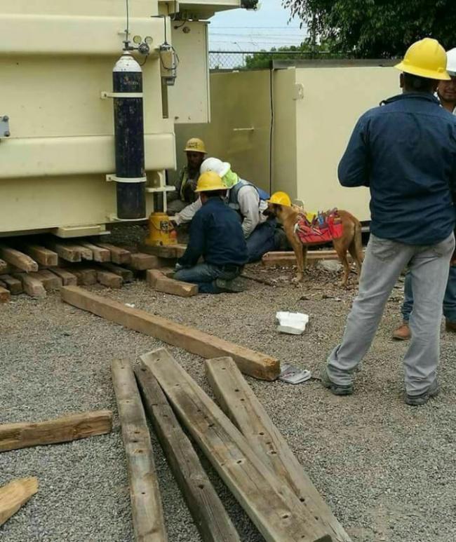 © imgur  Сотрудник больницы рассказал, что местным ремонтникам помогает пес. Онприносит нужны
