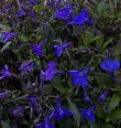 Цветы на моем участке. Разное