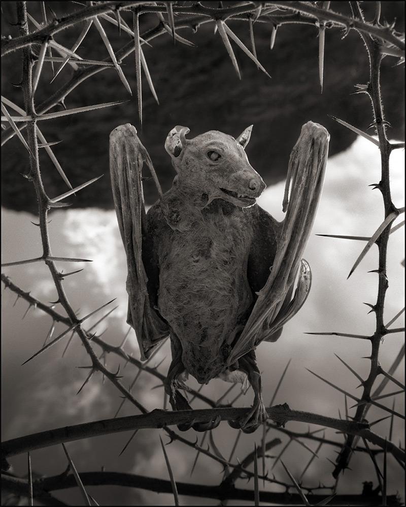 Calcified Bat II, Lake Natron, 2012
