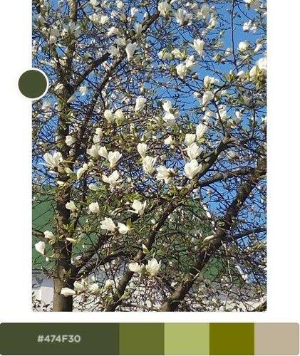 Весенние цветы Закарпатья