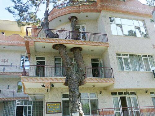 Дома вокруг деревьев